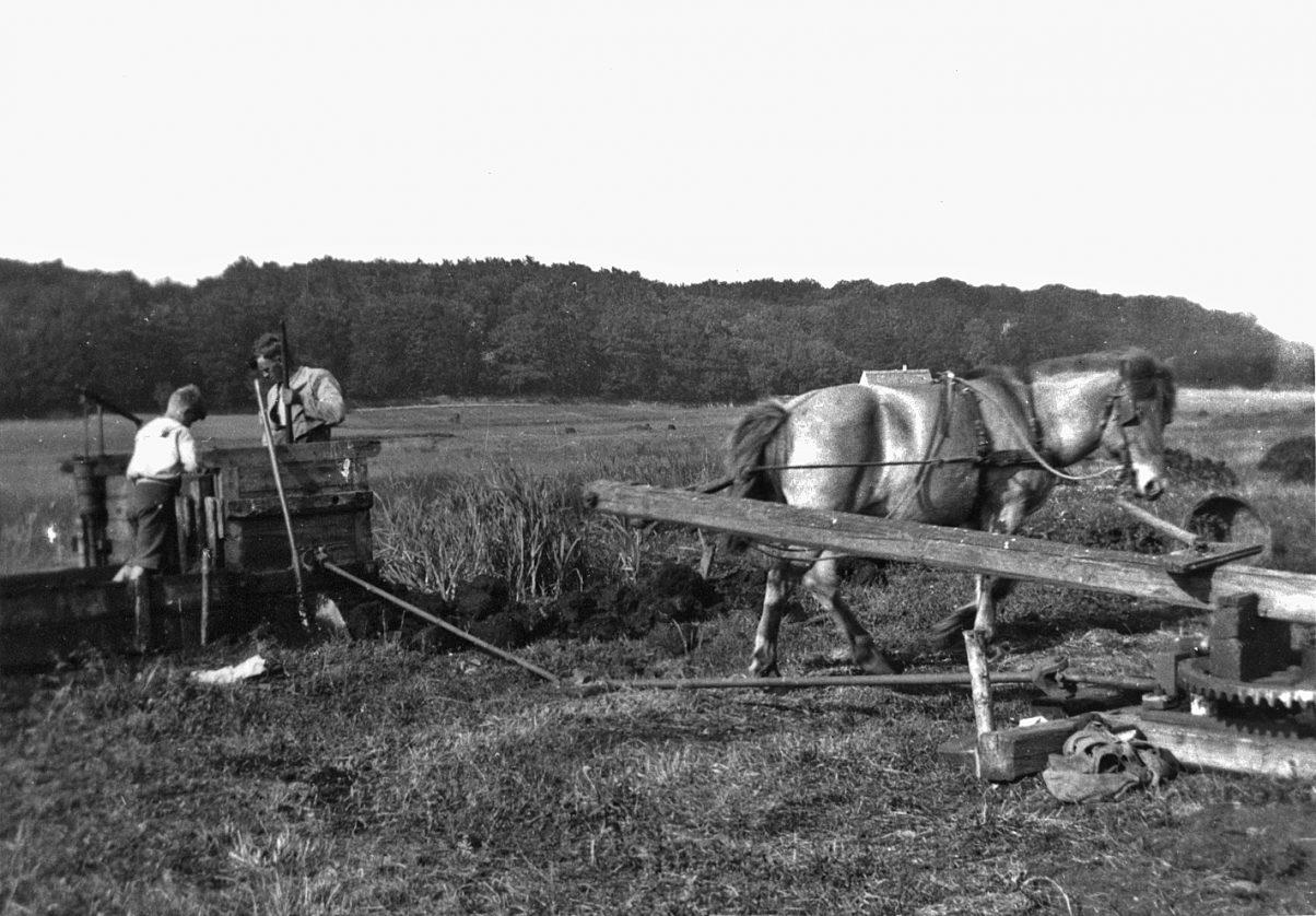Tørveæltning i Oremosen - 1945 - klik for større udgave